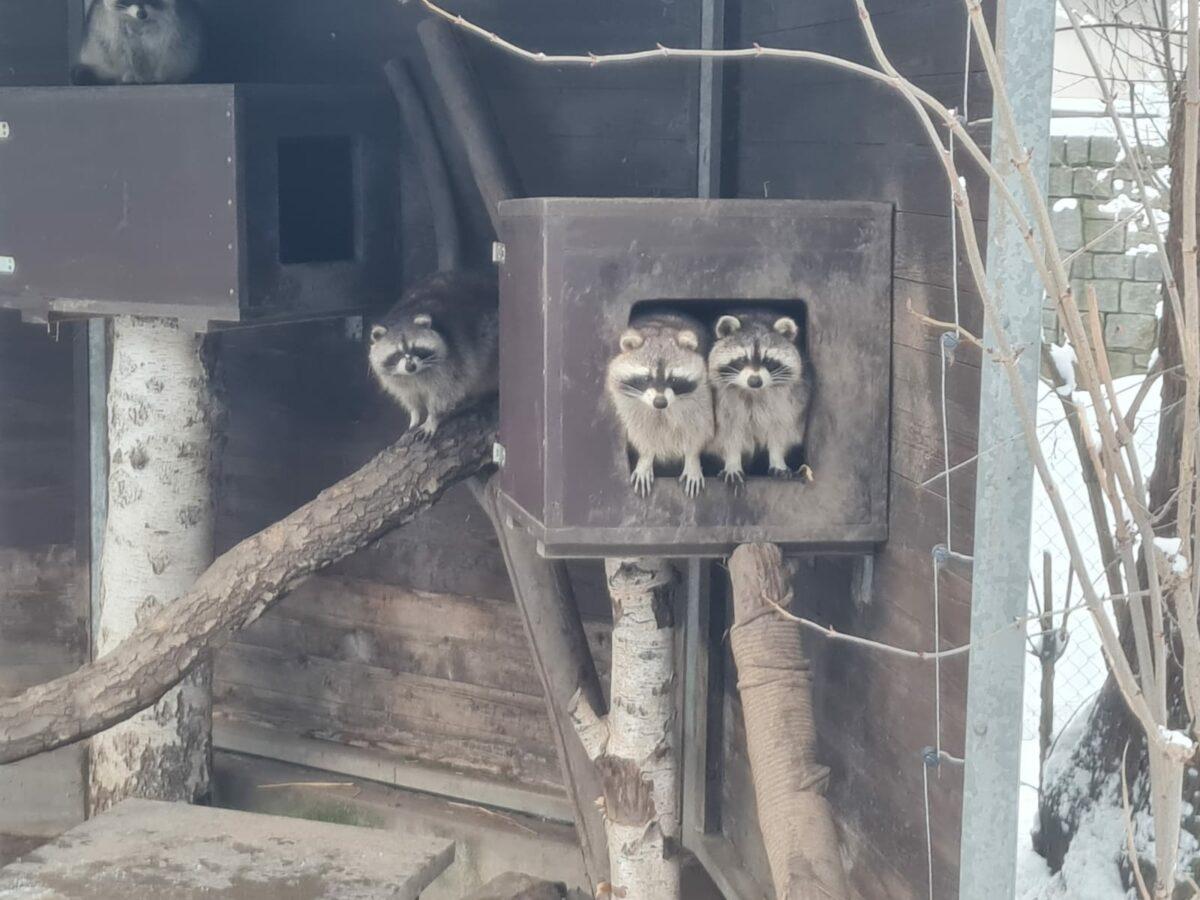Der Zoo Hof braucht Hilfe