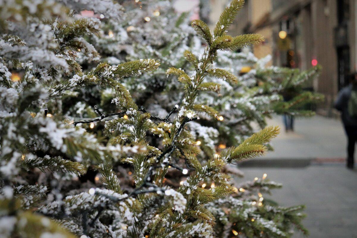 Weihnachtsbaumsammlungen im Landkreis Hof fallen teilweise aus